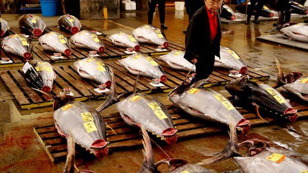 سوق أسماك تسوكيجي اليابانية الشهيرة تقيم آخر مزاد قبل نقلها