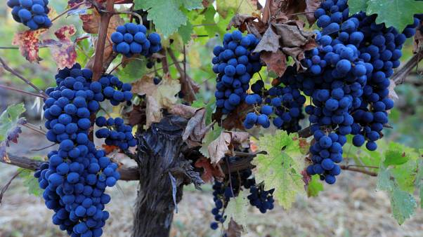 النبيذ اللبناني يعيد الحياة للقرى والمهاجرين إلى وطنهم