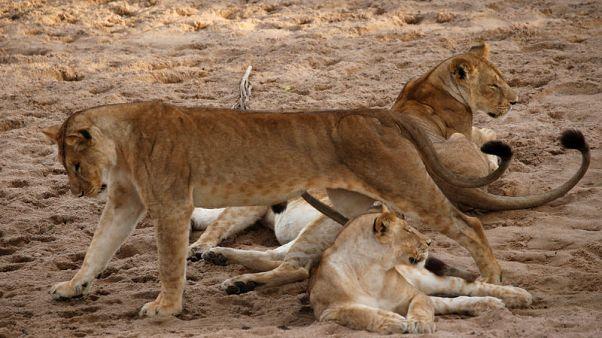 Tanzanian rangers harness new technology to fight poachers