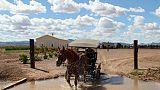 Fuyant l'électricité, les Mennonites du Mexique cherchent un nouveau refuge