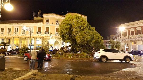 Cade vecchio pino in centro Crotone