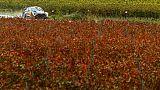 Rallye de Catalogne: Ogier, Loeb et Neuville dans un mouchoir derrière Latvala