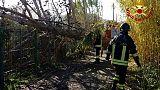 Cade albero,pullman bloccato nel Nuorese
