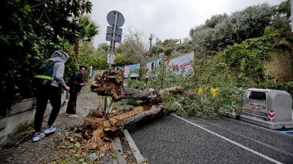 Cade albero a Napoli, muore un 21enne