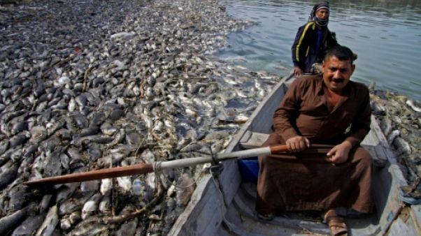 En Irak, un mystérieux mal décime les carpes de l'Euphrate