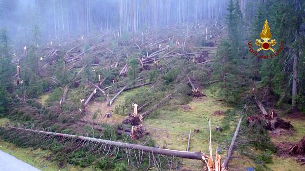 Italian storms claim 17th life, and 14 million trees