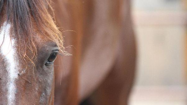 Sos cavalli, in campo nipote Berlusconi
