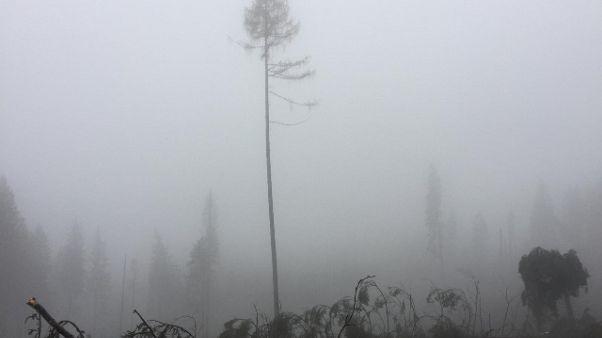 Esperto, recupero boschi molto difficile