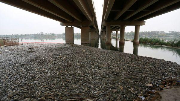 تضرر مزارعي الأسماك في العراق بسبب نفوق الشبوط وسط مخاوف من التلوث