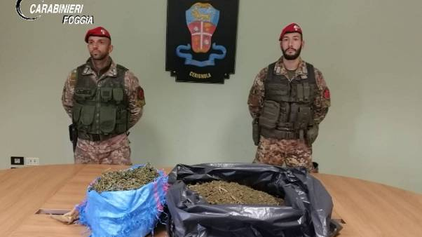 Madre e figlio nascondono 8,5kg cannabis