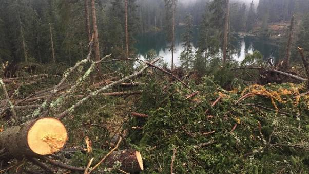 Maltempo, legno fa gola all'Austria