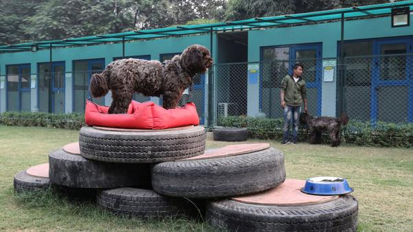 Paws for breath: India's pampered pooches get clean air as people choke on smog
