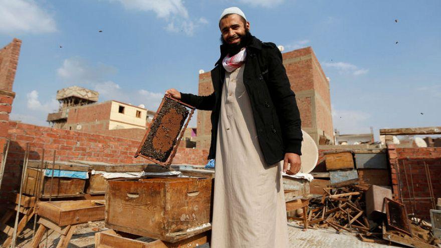 شاهد: عمر أبو الحسن مصري يربي النحل لسمّه لا لعسله