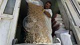 مؤسسة الحبوب السعودية تشتري 495 ألف طن قمحا في مناقصة