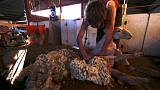 Australian drought, sporty shoppers push up prices of wool clothing