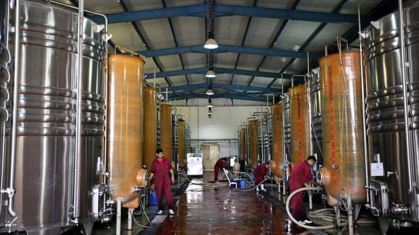 Egyptian winery battles climate, culture to produce award-winning bottles