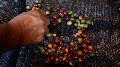 New machine offers relief for Colombian coffee-growers' labour woes