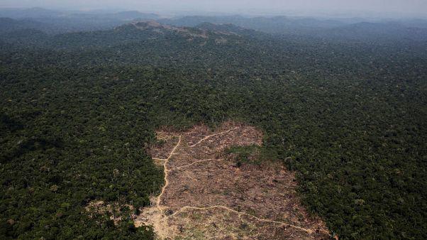قطع أشجار غابات الأمازون بالبرازيل يبلغ أعلى مستوياته منذ عقد