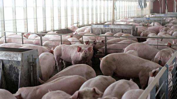 China buys U.S. pork despite trade tariffs as hog disease spreads
