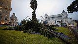 Spelacchio a Roma, rotto qualche ramo