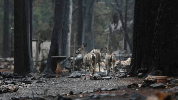 Parts of ravaged Paradise open for first time since California wildfire