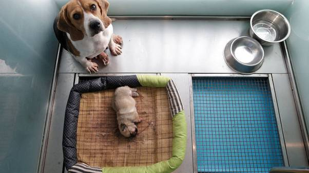 Two of a kind - China's first pet cloning service duplicates star pooch