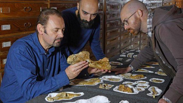 Big dinosaur predator from Italy was given a burial at sea