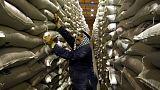 مصادر: الأردن يشتري 60 ألف طن من علف الشعير في مناقصة