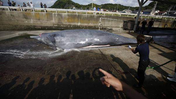 Japan to withdraw from International Whaling Commission - Kyodo News