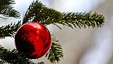Salvini a testa in giù su albero Natale