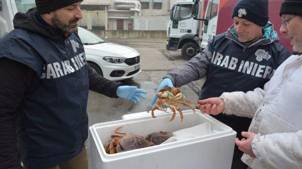 Sequestrati 360 kg granchi vivi e pesce
