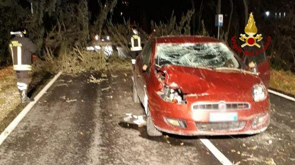 Maltempo,albero cade su auto in transito