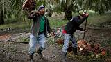 Guatemalan farms shift to palm oil, fuelling family migration