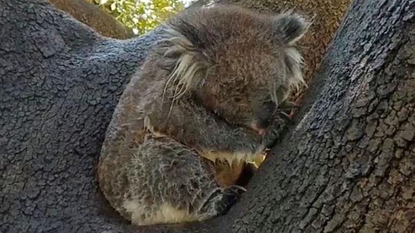 السلطات الأسترالية تحذر المواطنين من الحر الشديد