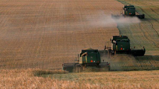 تجار: الأردن يشتري 60 ألف طن من علف الشعير في مناقصة