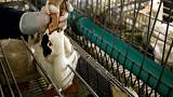French foie gras makers fed up by toughened California ban