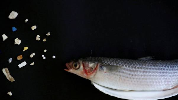 EU Chemicals Agency proposes ban on deliberately added microplastics to combat pollution