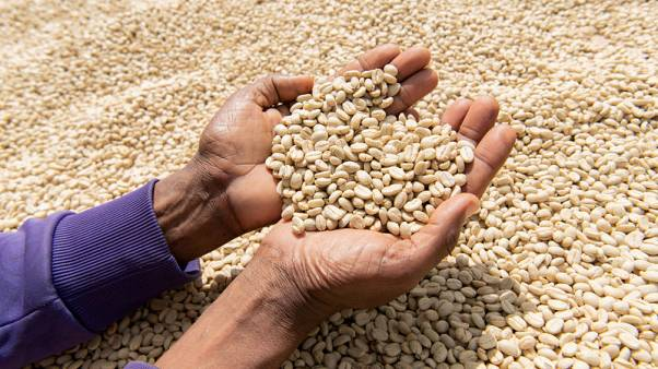 Ugandan firm uses blockchain to trace coffee from farms to stores