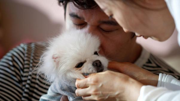 Like a son but cheaper - harried South Koreans pamper pets instead of having kids