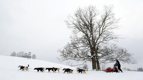 Czech 'musher' wins 300-km dogsled race through snowy mountains