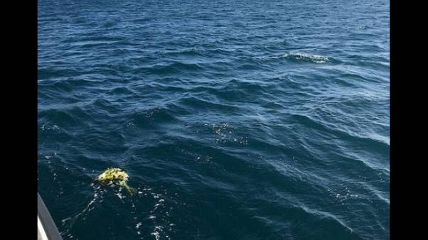 Naufragio migranti 16/11, fiori in mare