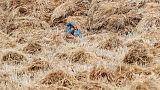 مصر تتوقع إنتاج 9.5 مليون طن من القمح المحلي في 2019