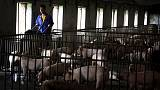 Chinese pork prices to rebound next quarter, world's top exporter predicts