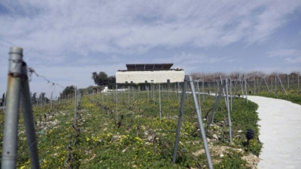 """Loin de Tokyo, """"rien n'a changé"""" dans les vignes libanaises de Carlos Ghosn"""