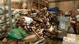Uganda seizes ivory, pangolin scales worth an estimated $8 million