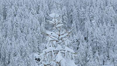 Valanghe: Dolomiti, pericolo a grado '4'