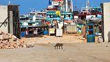 مقتل رئيس عمليات موانئ بي.آند.أو المملوكة لدبي في بلاد بنط بالصومال