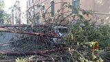 Forte vento a Taranto, alberi su auto