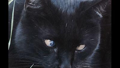 'Paese streghe', statua a gatti uccisi