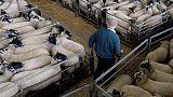 British farmers face Brexit date shipment conundrum